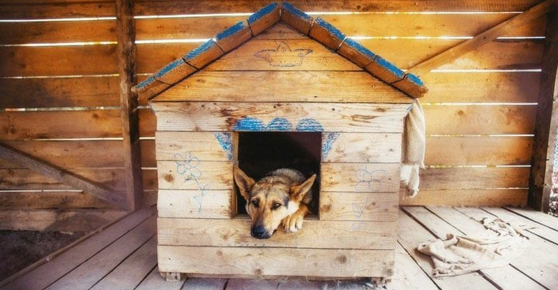 How to Crate Train a Puppy at Night Whining